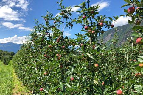 Apfelanbaugebiet in Bozen und Umgebung