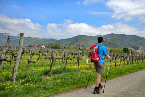 Hiker on the World Heritage Trail Wachau