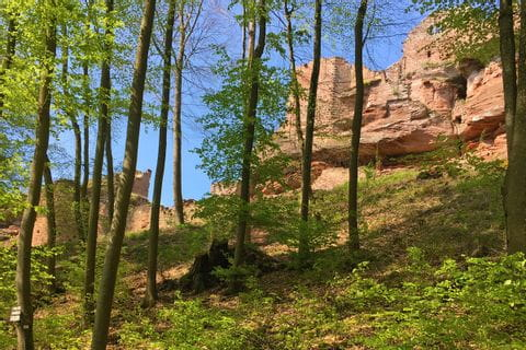 Walking in Alsace through the beautiful forests and past great castles/ruins