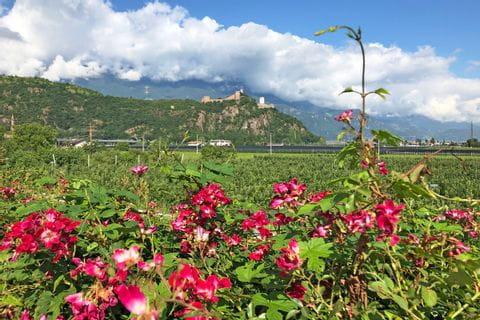 Blumenpracht in Bozen