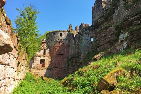 Cultural highlight in Alsace: castle ruins