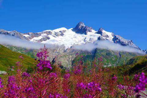 Floral splendor in the Mont Blanc region