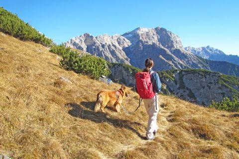 Gipfelpanorama im Pinzgau beim Wandern mit Hund