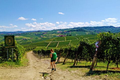 Hiking trails through vineyards