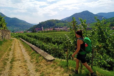 Hiking trail through the grapevines of Spitz