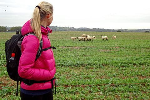 Wanderer bei Schafherde