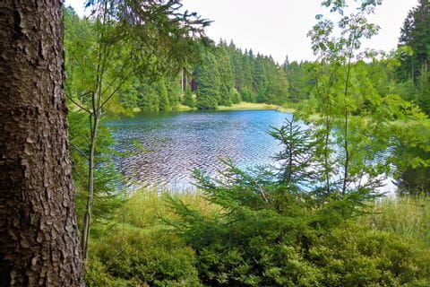 Idyllischer See vom Wald umgeben