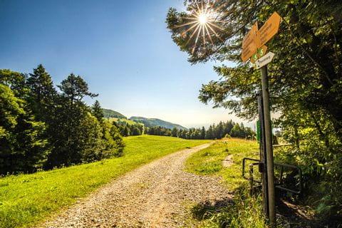 Hiking path in Weissenstein