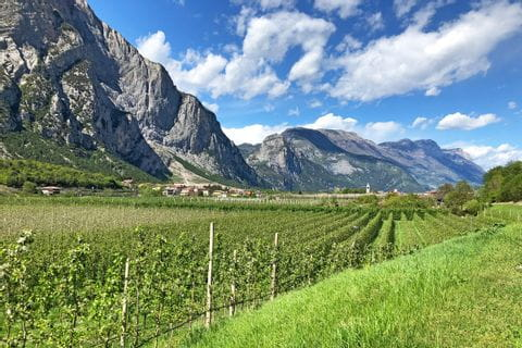 Hike through vineyards with mountain views