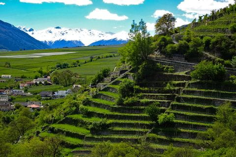 Ausblick auf die Weinberge im Vinschgau
