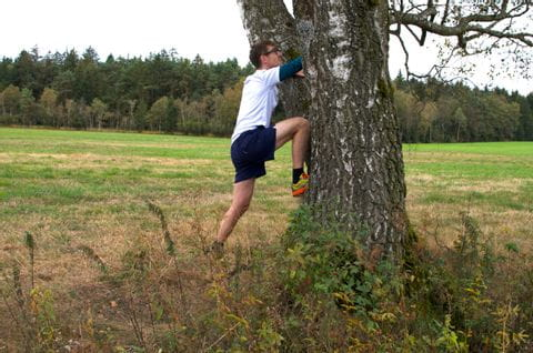 Forest workout exercise tree climbing