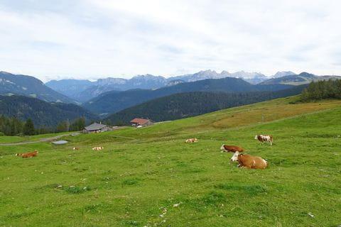 Kühe auf den Loferer Steinbergen