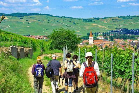 Beautiful hiking paths through the wine fields