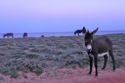 Loose donkeys