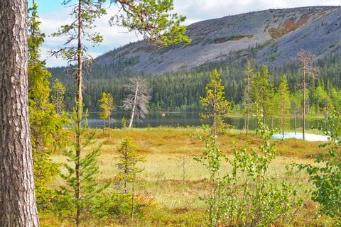 Hiking experience in the nature of Finland