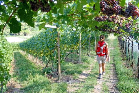 Hiking without luggage through the vineyards of southern Tyrol