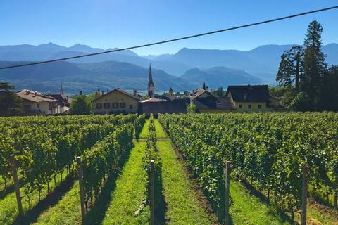 Weinreben mit Blick auf eine Südtiroler Kirche