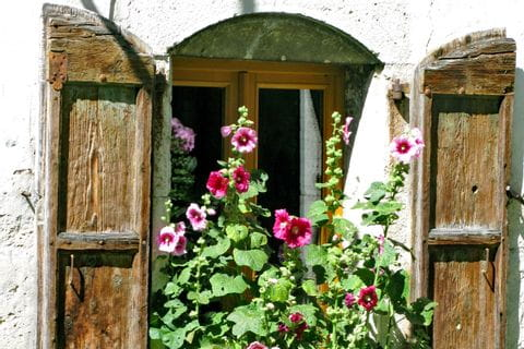 Wanderwege entlang blühenden Fensterblumen