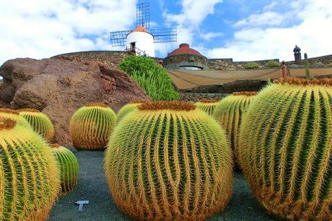 Cacti on the Canary Island