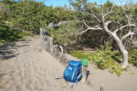 Pinienbaum am Rande des Wanderweges in Cecina