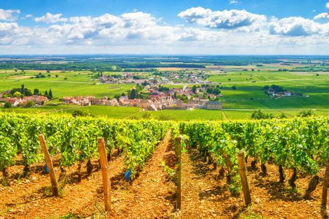 Wonderful walking views to wine rebs in Burgundy