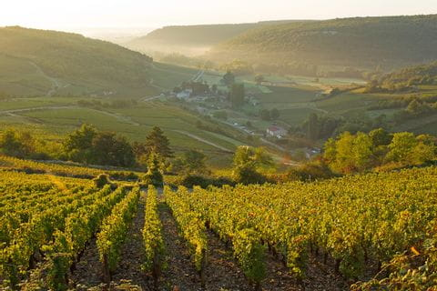 Weinberge beim Wandern im Burgund