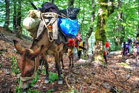 Donkey as a traveling companion
