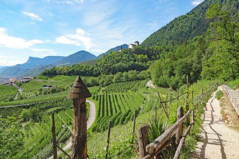 Bergwandern inmitten grüner Weingärten bei Meran