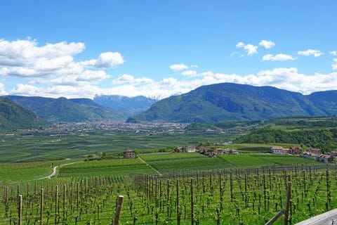 Hiking paths along vineyards in Southern Tyrol