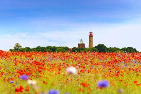 Mohnblumenfeld auf Rügen
