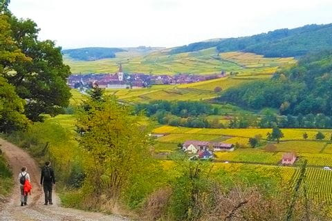 Walking with beautiful views of the vineyards in Alsace