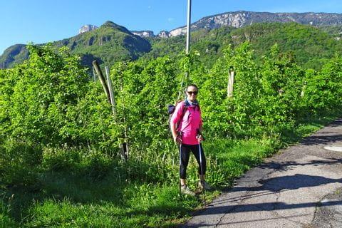 Wanderer in den Weinbergen