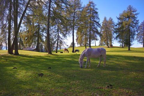 Pferd grast am Sagenweg in Salten