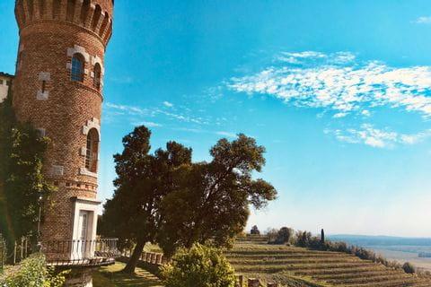 Typical vineyards in the region Friuli-Venezia Giulia