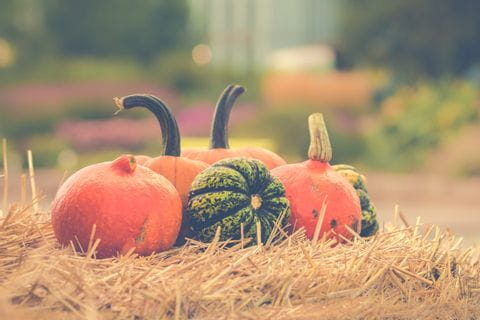 Pumpkin time in autumn
