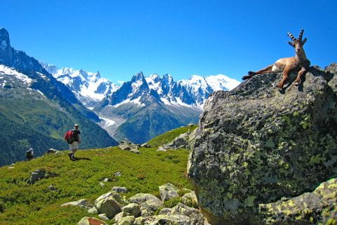Hiking with view o the landscape and animals at the Mont Blanc