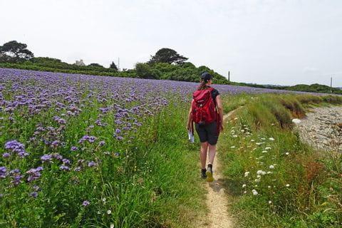 Bretagne Wanderer Blumenfeld