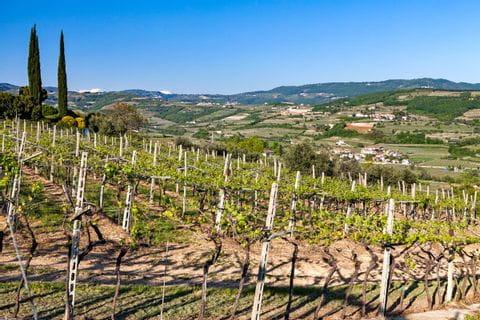 Hiking through the vineyards of Parona