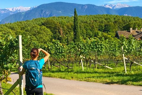 Gardasee Wanderer Weinstöcke
