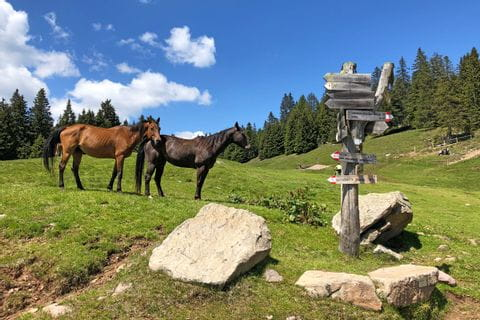 Pferde auf der Alm bei Rundwanderung Mölten