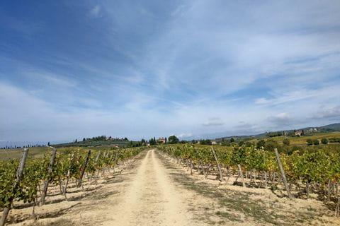 Wanderweg mit Ausblick auf die Weinreben in der Toskana