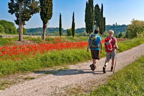 Hiking bliss along blooming poppy fields
