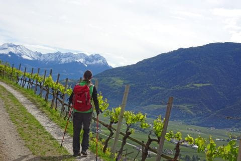 Wandern durch die schönen Weinberge in Italien