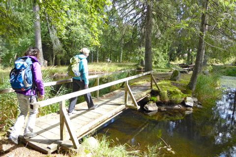 Bridge at the Black Forest