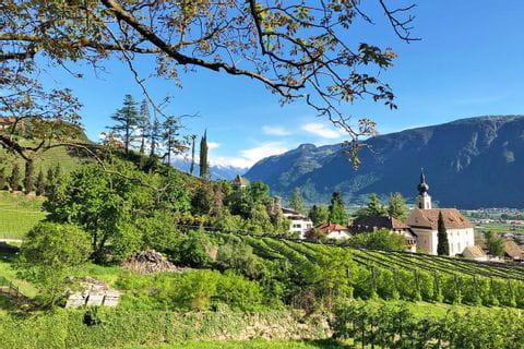 Wandern durch die Weingärten in Südtirol