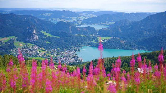 Frühlingsblumen mit wunderschönem Blick auf den Wolfgangsee