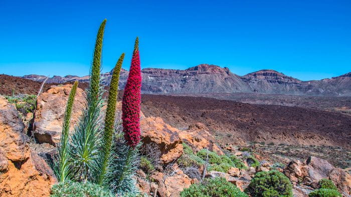 Eurohike-Tours on the island of Teneriffa