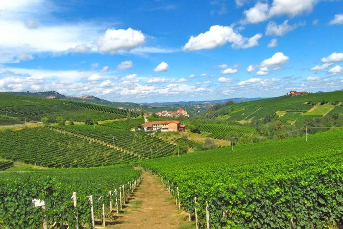 Weinberge in Piemont