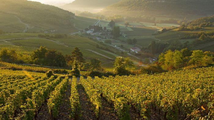 Wandern im Burgund